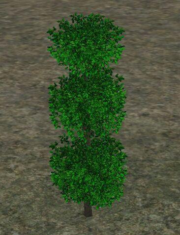 File:TopiaryPlant.jpg