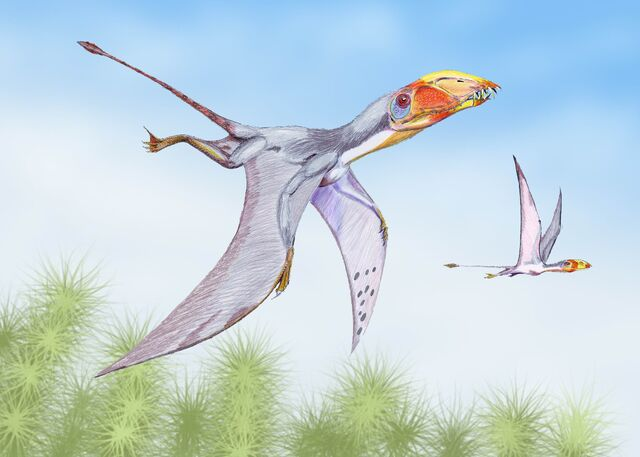 File:Dimorphodon2DB.jpg