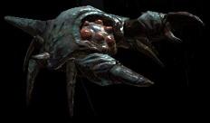 File:Shield crab.jpg