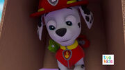 PAW Patrol Pups Save the Critters Marshall 3