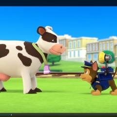Pup VS Cow