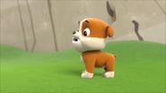 Pups get a rubble 12