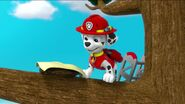 PAW Patrol Pups Save the Songbirds Scene 20