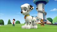 Pups get a rubble 11