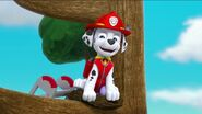 PAW Patrol Pups Save the Songbirds Scene 45