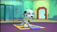 Do the Pup Pup Boogie - 1x11A Pups Leave Marshall Home Alone