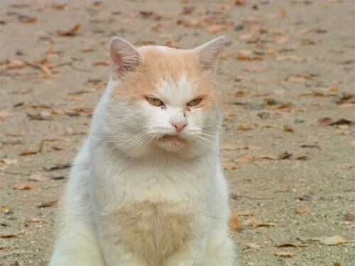 File:Disgusted cat.jpg