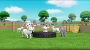 Sheep 41