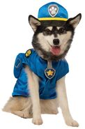 Pet costume- chase
