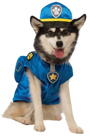 File:Pet costume- chase.jpg