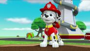PAW Patrol Pups Save the Songbirds Scene 6