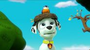 PAW Patrol Pups Save a Goldrush Scene 8