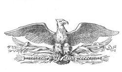 Eaglet111