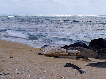 File:Kauai beach.jpg