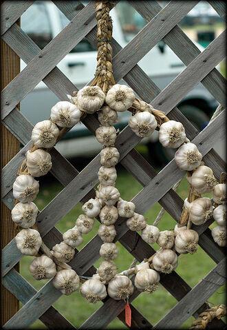 File:Peace Sign made of Garlic.jpg