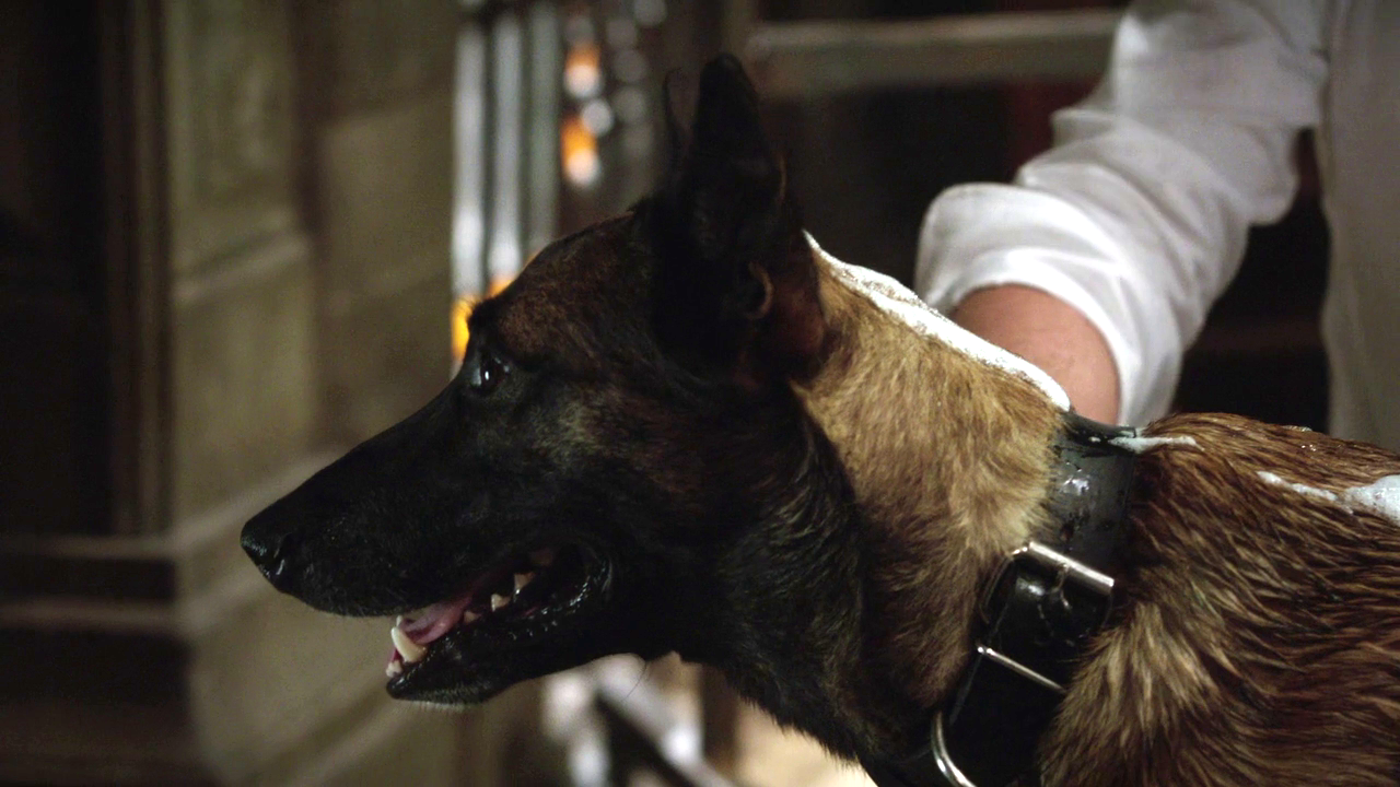 Image - POI 0210 Bear.png | Person of Interest Wiki