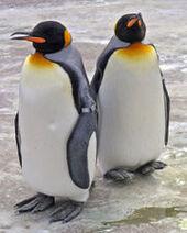 Penguins Edinburgh Zoo 2004 SMC
