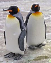 File:Penguins Edinburgh Zoo 2004 SMC.jpg