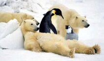 Polar bears and penguins!