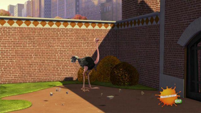 File:Ostrich-001.JPG