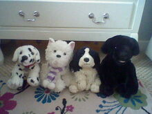 Dogs Family-2