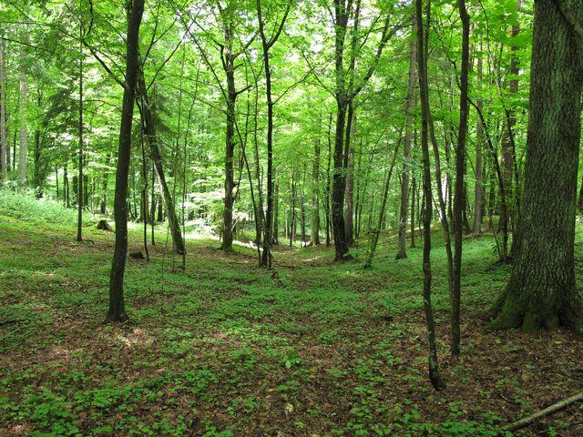 File:Forest full of ninjas.JPG