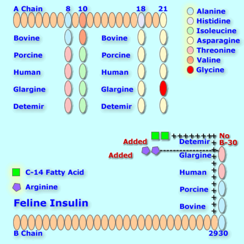 File:Felineinsulin analog.png