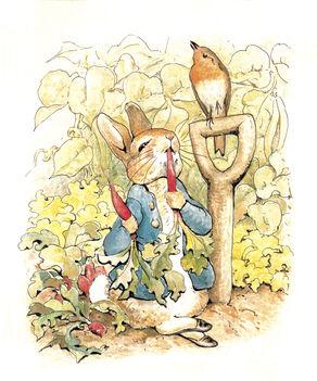 Peter Rabbit Image - Preferred Image