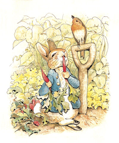 Peter Rabbit Image - Preferred Image