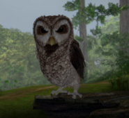 Old-Brown-Owl-Angery-Character-Image