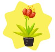 Homegrown desert tulip