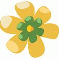 Cactus flower fruit