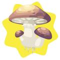 Gigantic homegrown jungle mushroom