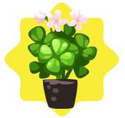 Homegrown clover flowers