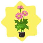 Homegrown Pink Dahlia
