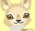 Coyote head 1