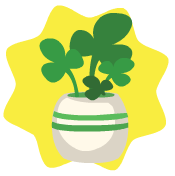 Shamrock pot plant