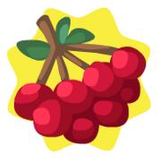 Homegrown cranberries