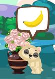 Grown bear petling3