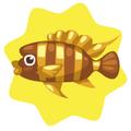 Golden frontosa fish