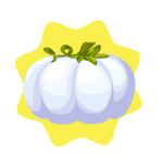 Tiny Cinderella Pumpkin