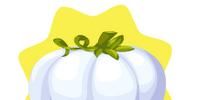 Homegrown Cinderella Pumpkin