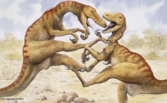 File:Utahraptor 1.jpg