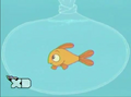 203b- goldie in aquarium.png