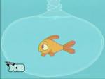 203b- goldie in aquarium