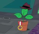 Planta do Vaso de Planta