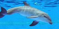 Delfiniphobia