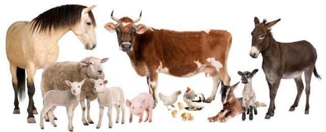 File:Farm Animal.jpg