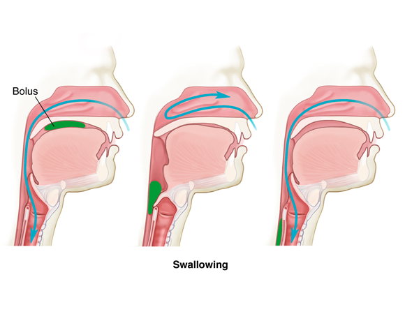 File:Swallowing.png