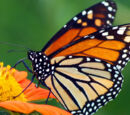 Lepidopterophobia